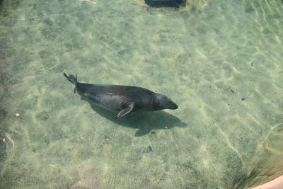 One of the Beautiful Seals At Adventure Aquarium