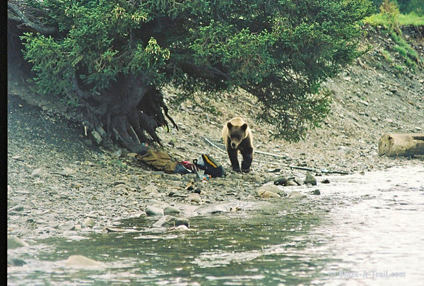 ....and under the tree was a nice sandwich resting in a backpack for the bear to take. The people that owned the bag were near me wondering if their lunch was going to be there after the bear left. Hardly! Another note: I turned to tell Michael that I was getting some cool pictures and noticed he bolted 1000 yards down river with our fish!