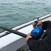 Halibut charter out in the Cook Inlet - Our group secured over 500+ pounds of fish.  After filet, approx. 40 pounds per person. Michael is focused and nabs another large one.