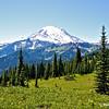 Mt. Rainier alpine wilderness
