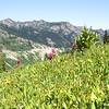 Alpine meadow with wildflowers
