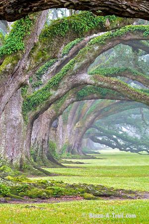 A mist forms as dusk approaches Oak Alley Plantation<br /> Oak Alley Plantation, Louisiana (November 2009)