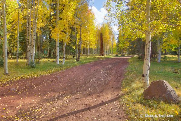 White Mountains Fall Colors & Wildlife