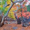 Ramsey Canyon Fall Colors