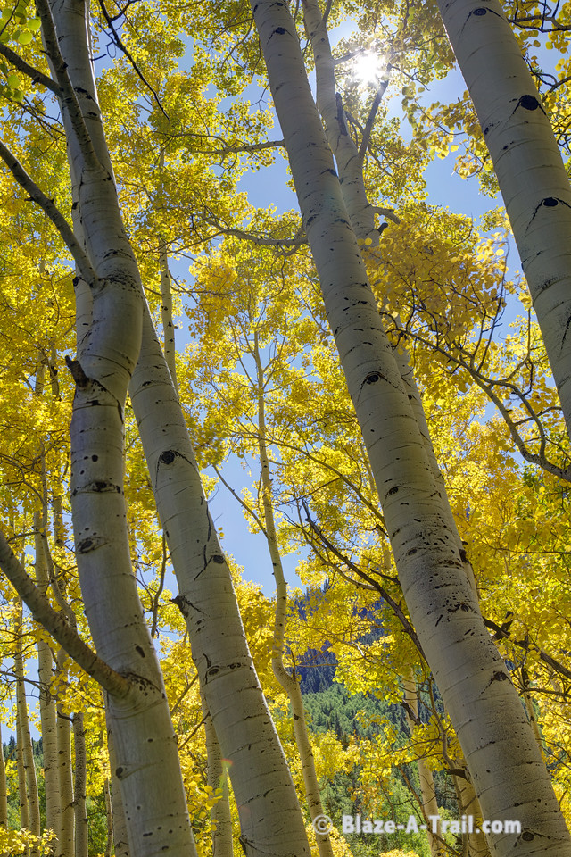 Fall Colors along Ophir Road (Telluride, Colorado) September 2011