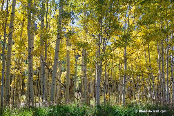 Fall Colors along Ophir Road (Telluride, Colorado) September 2011