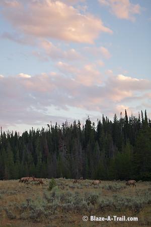 """Elk Herd - Grand Teton National Park (August 2011) View Blog Post:  <a href=""""http://Blaze-A-Trail.blogspot.com/2012/05/grand-teton-national-park.html"""">http://Blaze-A-Trail.blogspot.com/2012/05/grand-teton-national-park.html</a>"""