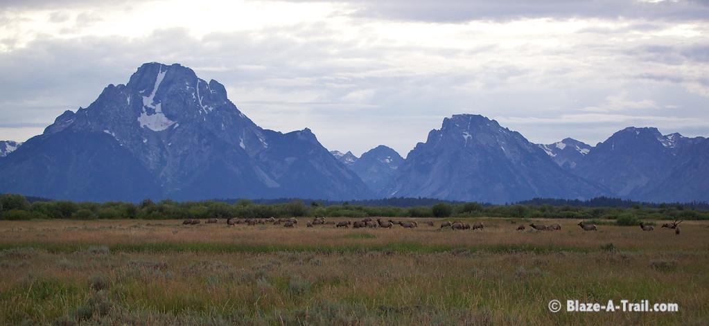 "Elk herd at base of Mt. Moran (August 2011) View Blog Post:  <a href=""http://Blaze-A-Trail.blogspot.com/2012/05/grand-teton-national-park.html"">http://Blaze-A-Trail.blogspot.com/2012/05/grand-teton-national-park.html</a>"