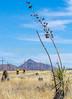 ACA -  Near Upper Elgin Rd & Hwy 82, Arizona - D3-C1- - 72 ppi-9