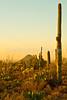 Saguaro National Park (west), AZ - D1-C3-0185 - 72 ppi