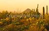 Saguaro National Park (west), AZ - D1-C3-0188 - 72 ppi-2