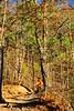 Mountain biker on Womble Trail in Arkansas' Ouachita Mountains - 5 - 72 ppi