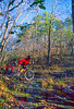 Mountain biker on Womble Trail in Arkansas' Ouachita Mountains - 10 - 72 ppi