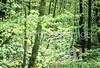 B nc heintooga 13 - ORps - 72 dpi - Heintooga Trail in Great Smoky Mountains National Park in North Carolina