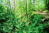 B nc heintooga 6 - ORps - 72 dpi - Heintooga Trail in Great Smoky Mountains National Park in North Carolina