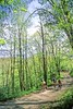 B nc heintooga 15 - ORps - 72 dpi - Heintooga Trail in Great Smoky Mountains National Park in North Carolina