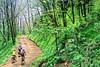 B nc heintooga 7 - ORps - 72 dpi - Heintooga Trail in Great Smoky Mountains National Park in North Carolina