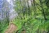 B nc heintooga 12 - ORps - 72 dpi - Heintooga Trail in Great Smoky Mountains National Park in North Carolina