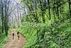 B nc heintooga 2 - ORps - 72 dpi - Heintooga Trail in Great Smoky Mountains National Park in North Carolina