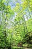 B nc heintooga 8 - ORps - 72 dpi - Heintooga Trail in Great Smoky Mountains National Park in North Carolina