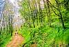 B nc heintooga 12 - ORps - 72 dpi - Heintooga Trail in Great Smoky Mountains National Park in North Carolina-2-2