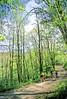 B nc heintooga 9 - ORps - 72 dpi - Heintooga Trail in Great Smoky Mountains National Park in North Carolina