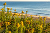 Nauset Beach in Cape Cod Nat'l Seashore, MA - C3-0003 - 72 ppi