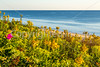 Nauset Beach in Cape Cod Nat'l Seashore, MA - C3-0010b - 72 ppi