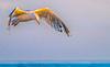 Cape Cod - Seagull - 72 ppi