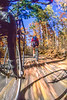 Bike path at Itasca State Park, MN, headwaters of Mississippi River - 8-Edit - 72 ppi