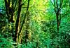 North Cascades National Park in Washington state - N wa cascades 5 - 72 dpi