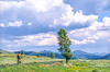 Cyclist in Yellowstone National Park's Lamar Valley - 1-Edit - 72 ppi