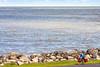 Touring cyclist along Lake Erie near Ashtabula, OH-0191 - 72 ppi