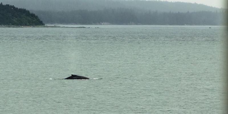 Whale Portside!
