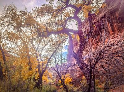 The Shadow Tree