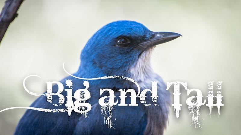 Big and Tall Slideshow with Music