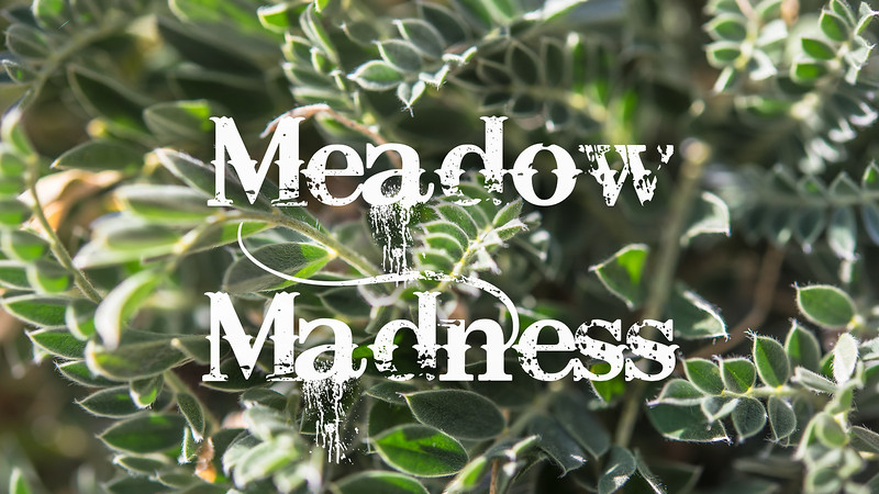 Meadow Madness Slideshow with Music