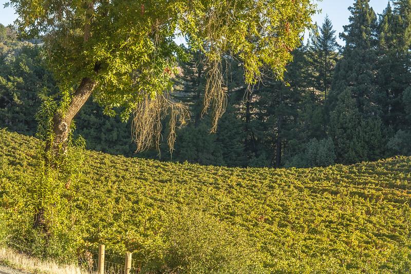 Wine Sprawl