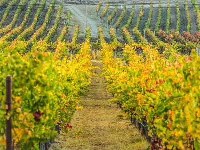 Wine This Way