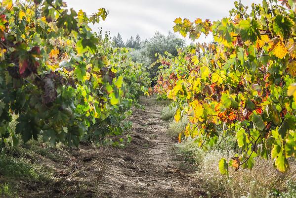 Winey Path