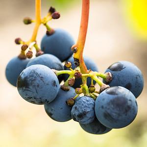 Pre-Wine