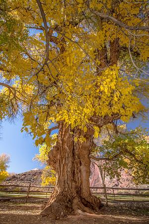 The Deku Tree
