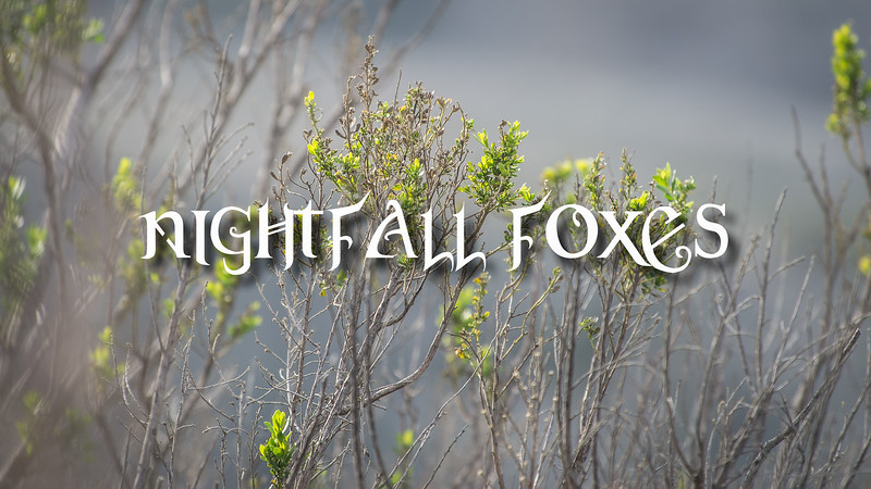 Nightfall Foxes Slideshow with Music
