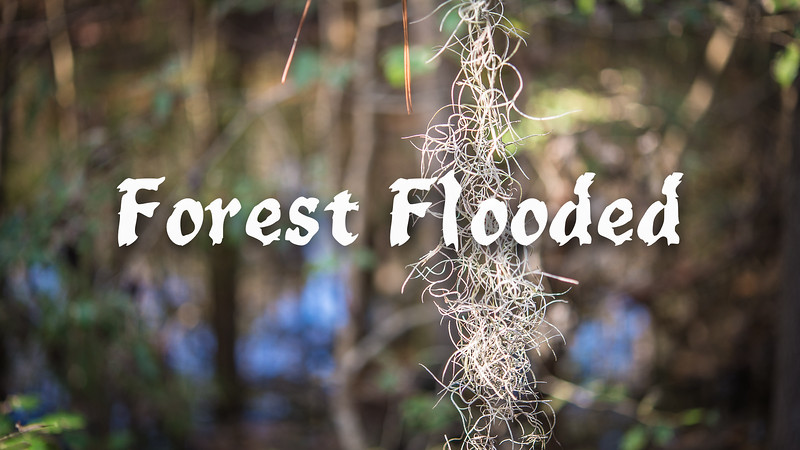 A Forest Flooded Slideshow with Music