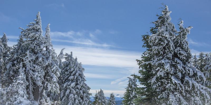 Tree Peak