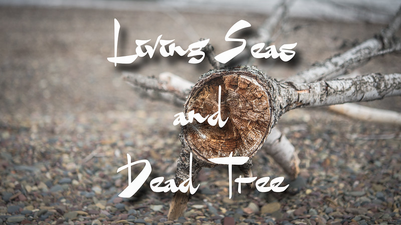 Living Seas and Dead Trees Slideshow with Music