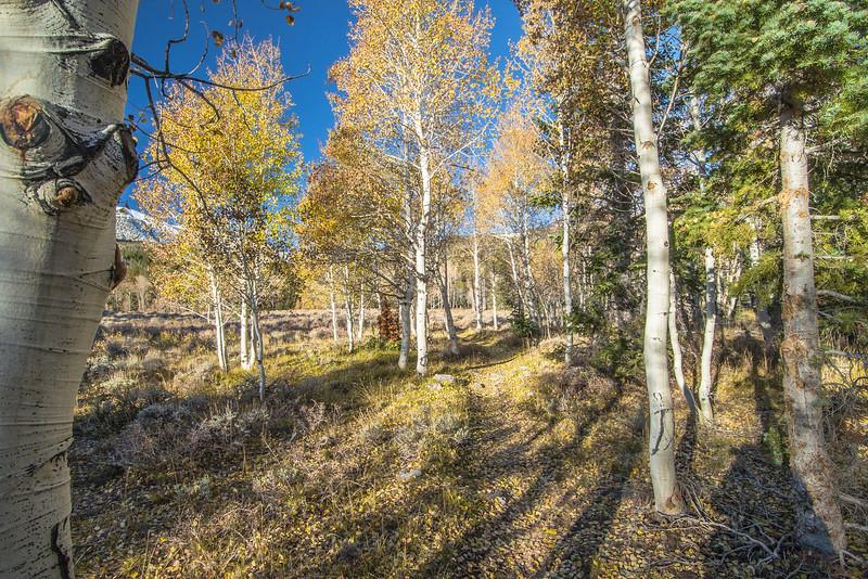 Golden Trails