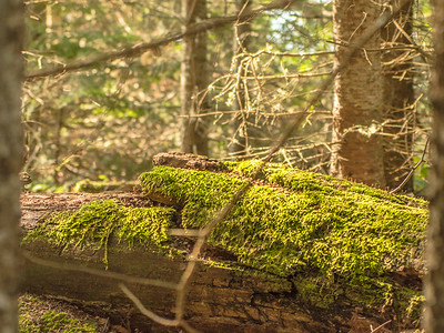 Moss Covers Tree