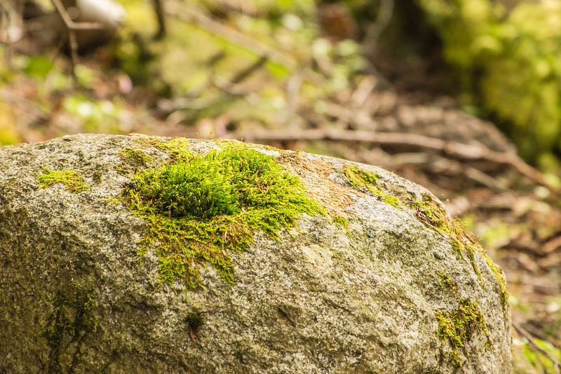 Moss Covers Rock