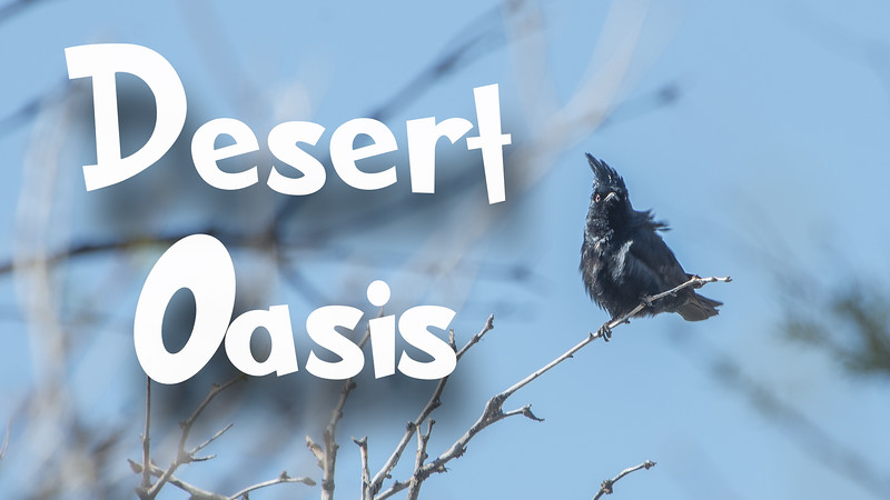 Desert Oasis Slideshow with Music